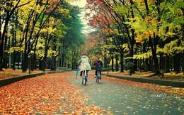 Mùa thu Nhật Bản đẹp như tranh dưới ống kính du học sinh Việt