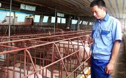 Cử nhân Kinh tế bỏ lương 400 triệu/năm về quê… nuôi lợn