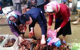 Văn Bàn: Người dân bày bán loại hoa lạ làm thuốc ngâm rượu