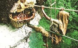 Thót tim màn đu vách núi của thợ săn ong ở bìa rừng xứ Mường