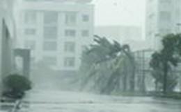Nơi đầu sóng ngọn gió vui mừng khi 'thoát' bão