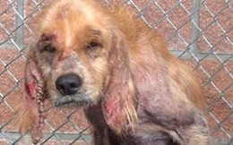 Cay mắt hình ảnh chú chó vô gia cư trước và sau khi được giải cứu