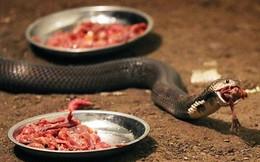 """Rùng rợn cảnh """"đột nhập"""" trang trại nuôi hơn 60 nghìn con rắn"""