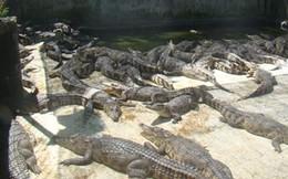 Đồng Nai: Về nơi nhà nhà nuôi cá sấu như... nuôi lợn