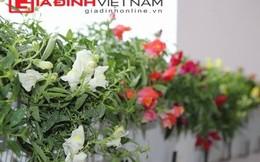 Vườn hoa đẹp tự nhiên trên ban công chung cư Hà Nội
