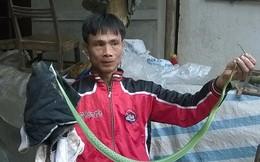 """""""Rắn thần"""" bất ngờ xuất hiện tại Hà Nội trong sáng nay"""