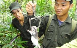 Phát hiện loài thú tuyệt chủng ở Việt Nam sau gần 100 năm