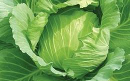 Công dụng cực quý của rau bắp cải rất ít người biết