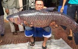 """Câu được cá trắm """"khủng"""", nặng 24,5kg ở hồ sông Giá"""