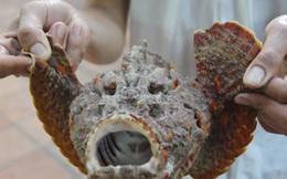 """Món cá biển có khuôn mặt """"quỷ dữ"""" lên bàn nhậu"""