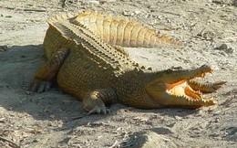 Cá sấu sổng chuồng ở hồ Trị An đã bị bắn chết