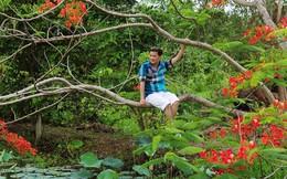 Đàm Vĩnh Hưng leo trèo cây cao