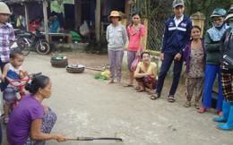 Rắn lục đuôi đỏ xuất hiện tràn lan ở Quảng Nam