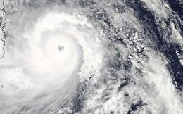 Đề đọc hiểu số 1: Bông súng và siêu bão Haiyan