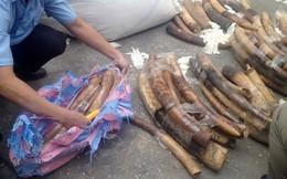 Phát hiện gần 1 tấn ngà voi ngụy trang găng tay cao su nhập lậu