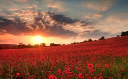 Ngất ngây những thiên đường hoa đẹp nhất thế giới