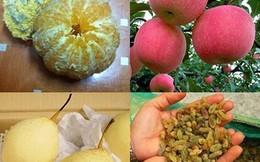 Những loại trái cây Trung Quốc khiến khách hàng vừa ăn vừa run sợ