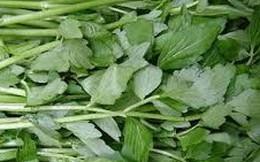 Bài thuốc hy hữu từ nấm lim, rau cần chữa khỏi ung thư gan