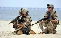 Mỹ 'phát sốt' khi đặc nhiệm SEAL thi nhau lộ bí mật