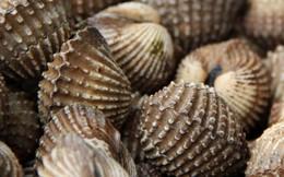 5 loại hải sản siêu độc hại rất nhiều người thích ăn