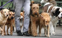 Kiếm tiền tỷ với nghề dắt chó thuê chuyên nghiệp ở châu Âu