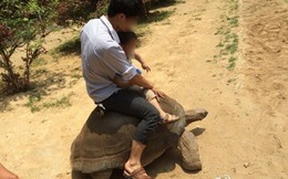 """Nhân viên sở thú """"ăn tiền"""", cho khách cưỡi rùa khổng lồ quý hiếm"""