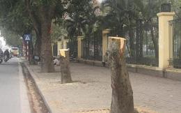 Chặt cây xanh Hà Nội lên báo quốc tế