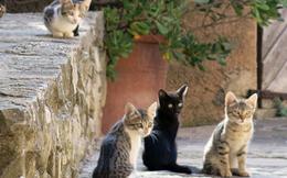 Mèo không hiền lành và dễ thương như bạn nghĩ