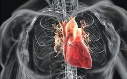Bệnh tim mạch bắt nguồn từ đâu?