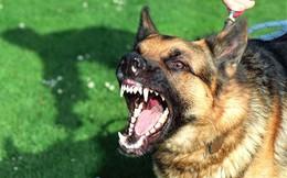 Cách nhận biết chó mắc bệnh dại