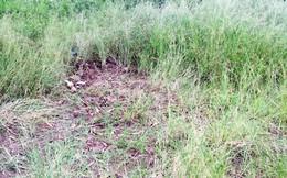 Phát hiện thi thể thai nhi phân hủy bên vệ đường