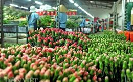 Vào trang trại hoa Đà Lạt xem quy trình đóng gói ngỡ như châu Âu