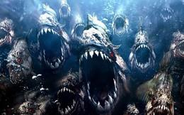 Video: Xem tận mặt 9 loài cá nguy hiểm nhất thế giới