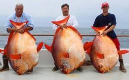 """Cận cảnh loài cá """"quái thai"""" nhất trong các loài cá"""