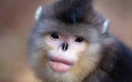 Tròn mắt trước những loài vật mới được phát hiện tại dãy Himalaya