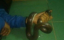 Hoảng hốt phát hiện rắn dài cả mét nằm ngủ giữa đường