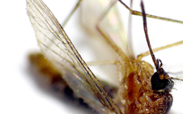Nên và không nên khi phòng tránh muỗi