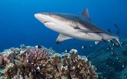 Những sự thật khó ngờ về cá mập