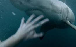 """Ngư dân thoát chết thần kì trước cá mập nhờ... chiêu """"nhất dương chỉ"""""""