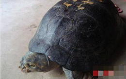 Nghệ An: Cả làng đổ xô đi xem con rùa quý, có hình thù kỳ lạ