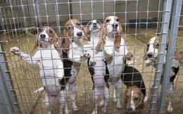 Nơi những chú chó được sinh ra để chết