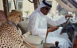 Những điều xa xỉ tới mức điên rồ chỉ có ở Dubai