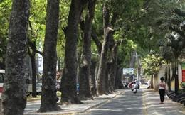 Trốn nắng gần 40 độ dưới hàng cổ thụ ở Sài Gòn