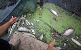 Kinh hoàng cảnh hàng nghìn con cá chết nổi lênh bềnh vì nước bẩn