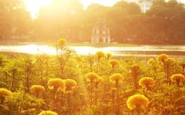 Hà Nội thơ mộng, óng vàng mỗi chiều thu qua