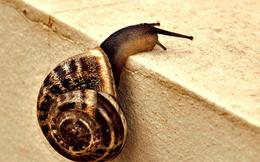 Clip cực hiếm: xem sinh vật chậm nhất hành tinh đẻ trứng