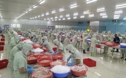 [Inside Factory] Hai nhà máy chế biến cá tra của Hùng Vương lớn cỡ nào?