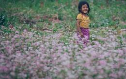 Chùm ảnh: Không ở đâu có thể thấy hoa tam giác mạch đẹp như xứ Hà Giang