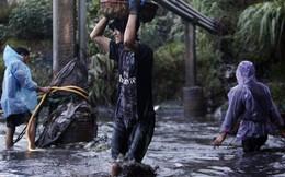 """Quảng Ninh: Hàng trăm người chặn lũ, ngụp lặn vớt """"vàng đen"""""""