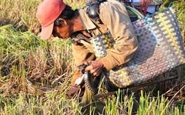 Theo chân thợ săn chuột đồng ở Sài Gòn